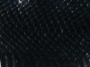 serpent-bleu-nuit